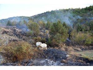 Sigara izmariti 5 dönümlük ormanı kül etti
