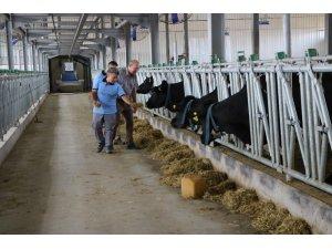 Bu çiftlikte ineklerin bakımını robotlar yapıyor