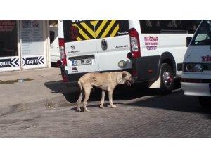 Öldü sanılan köpek hayata döndürüldü