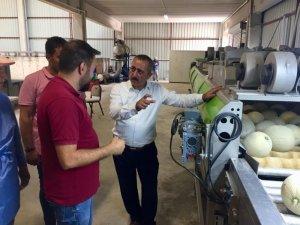 Niğde'de üretilen kantalup kavunu Avrupa'ya satılıyor