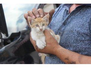Çarşamba'da kedi kurtarma operasyonu