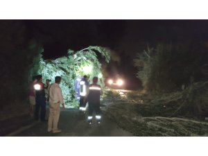 Ağaç dalları devrildi, otomobiller hasar gördü