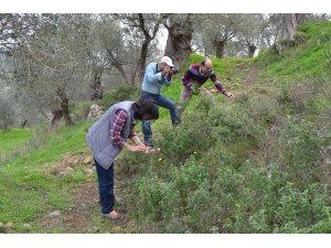 Bandırma'da 144 bitki çeşidi tıbbi amaçla kullanıyor