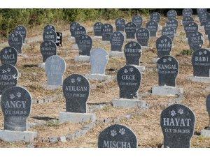 """""""Hayvan Mezarlığı"""" ile halk sağlığı korunmaya çalışılıyor"""