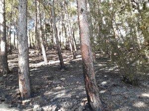 Tarihi Kozan Kalesi'ndeki yangında 3 dekar alan zarar gördü