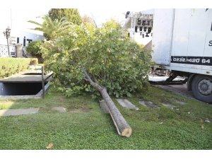 Konser alanı oluşturmak için ağaçları kestiler