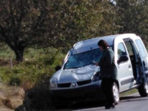 Hafif ticari aracın çarptığı geyik telef oldu