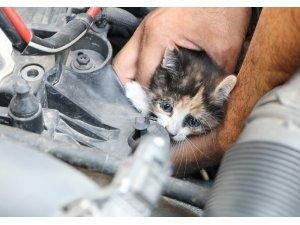 Otomobilde kedi kurtarma operasyonu