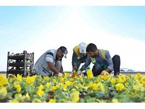 Refüj ve kavşaklara 1 milyon kışlık mevsimlik çiçek dikilecek