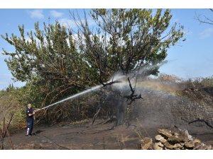 Antalya'da otluk ve çalılık yangını