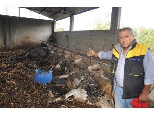 Osmaniye'de ahır yandı, 7 büyükbaş hayvan telef oldu
