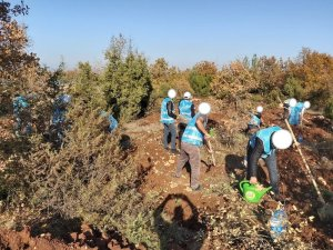 Adalet Ormanı'na hükümlüler tarafından 300 fidan dikildi