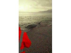 Sahile vuran dev Gagalı Balina'nın yardımına Sahil Güvenlik ekipleri koştu