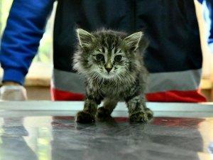 Ankara Büyükşehir'den 'hayvanlarda ilk yardım' eğitimi