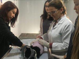 İstanbul'da Hayvan Hastanesi yeniden hasta kabulüne başladı