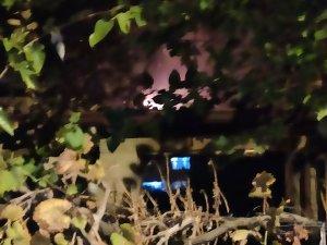 Samandağ'da kulübede çıkan yangın kontrol altına alındı