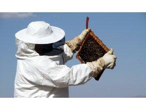 """Bayburt'ta arıların """"tatlı uykusu"""" başladı"""