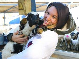 Genç veteriner hekimlerden Sakız koyunu çiftliğine ziyaret