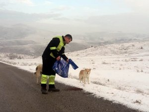 Sokak hayvanlarına mama desteği