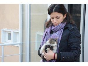 Öğrenciler ve belediye ekipleri minik kedi için seferber oldu