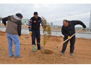 KAEÜ'sinde ağaçlandırma çalışmaları