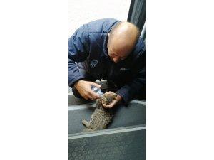 Otobüs şoförü yavru kediyi hayata bağladı