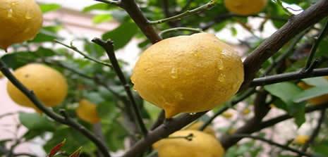 Limon, fiyatıyla da ferahlatıyor