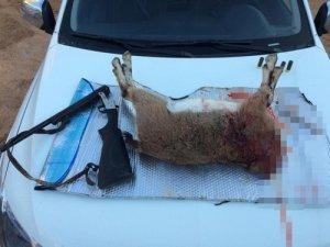 Koruma altındaki yaban keçisini avlayıp kafasını kesen 4 kişiye 33 bin 964 lira ceza