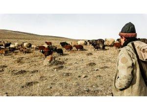 Ardahan'da kış ayında sıcak hava çiftçiye ekonomik kazanç sağlıyor