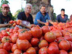 Rusya Tarım Bakanlığı, Türkiye'den domates alım kotasının 200 bin tona çıkarılması için teklif sundu