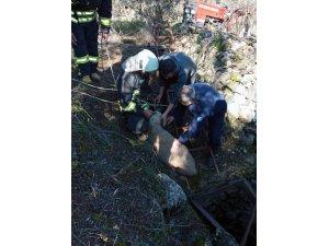 Kör kuyuya düşen kuzu itfaiyeciler tarafından kurtarıldı