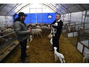Kayseri'de küçükbaş hayvancılıkta mutlu eden gelişmeler