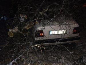 Gercüş'te yüz yıllık ağaç otomobilin üzerine devrildi