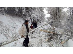 Ahlat'ta aşırı kar ağaçları devirdi, elektrik tellerini kopardı
