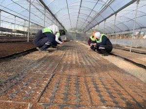 Kızıltepe Belediyesi fidanlığında 42 bin çiçek tohumu ekildi