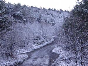 Kar yağışı etkisini gösterdi, Aydos Ormanı beyaza büründü
