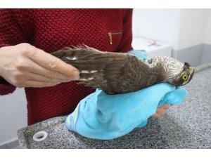 Yaralı 'kerkenez' kuşu doğaya salındı