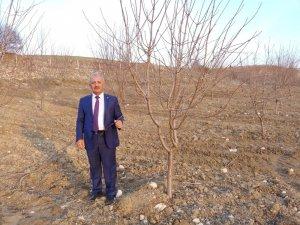 """Başkan Şahan: """"Adıyaman'da 150 bin badem ağacı kurudu"""""""