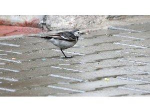 Tek ayaklı kuş sokağın maskotu oldu