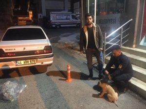 Duyarlı vatandaş yaralı köpeği belediyeye teslim etti