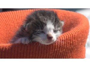 Yavru kediyi kalp masajı ve suni teneffüs yaparak hayata döndürdü