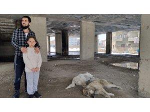 5 gündür inşatta mahsur kalan köpekler kurtarıldı