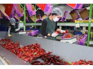 Antalya'da seralarda sebze üretimi hız kesmeden devam ediyor