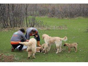 Bingöl'de sokak hayvanlarına yem ve mama bırakıldı