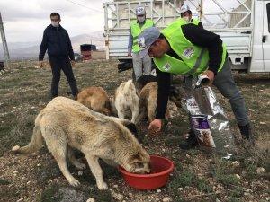 Niğde sokak hayvanlarına 5 ton mama dağıtıldı