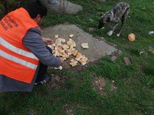 Akşehir'de sokak hayvanlarına mama desteği