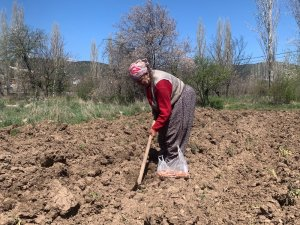 76 yaşındaki eşi dışarı çıkamadığı için tarlasını tek başına çapalayıp ekiyor