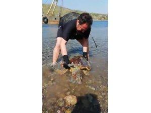 Deniz kaplumbağasının vücudunda gördükleri şok etti