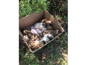 Antalya'da 7 yavrusu bulunan köpek tüfekle vurularak öldürüldü