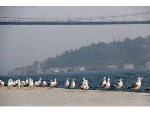 İstanbul'un ünlü sahiline martı akını